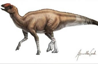 A New Kind Of Dinosaur Has Been Discovered In America