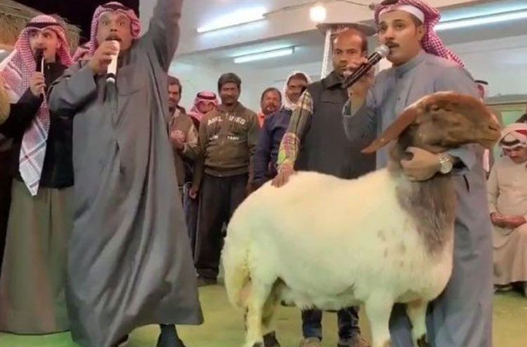 auction for a Sheep in Rs 200 million in Kuwait