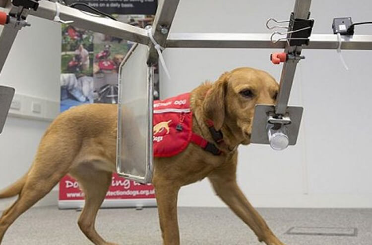 Dogs diagnose diseases