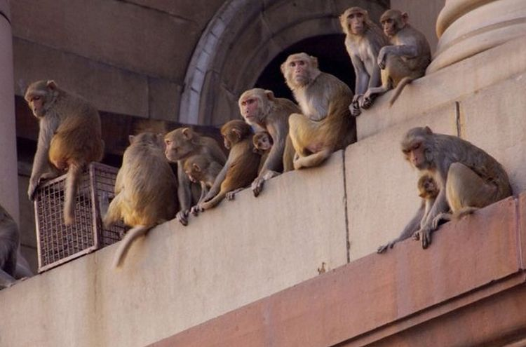 Monkeys occupy government office in India