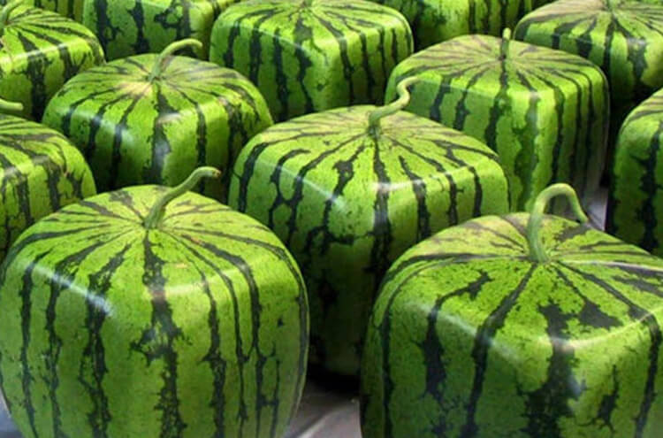 The most expensive watermelon in the world that cannot be eaten