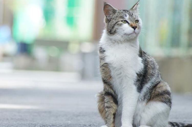 In Japan a cat saved the life of an injured man
