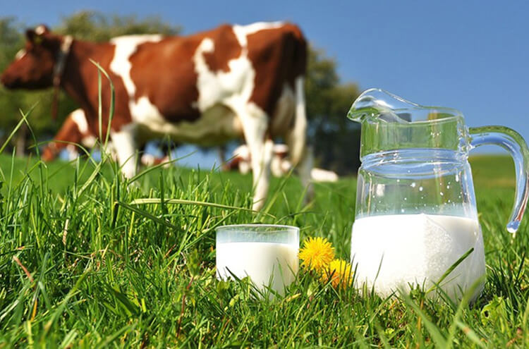 How dangerous is raw milk?