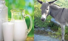 Donkey milk began to be sold in India