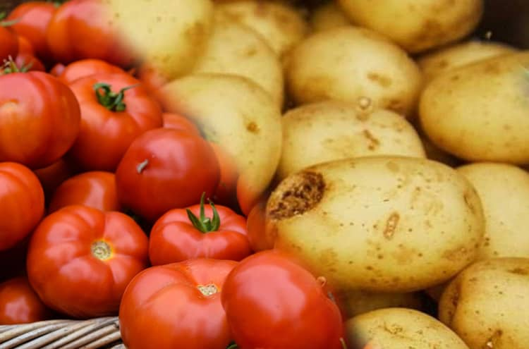 The government banned the import of potatoes and tomatoes from Iran